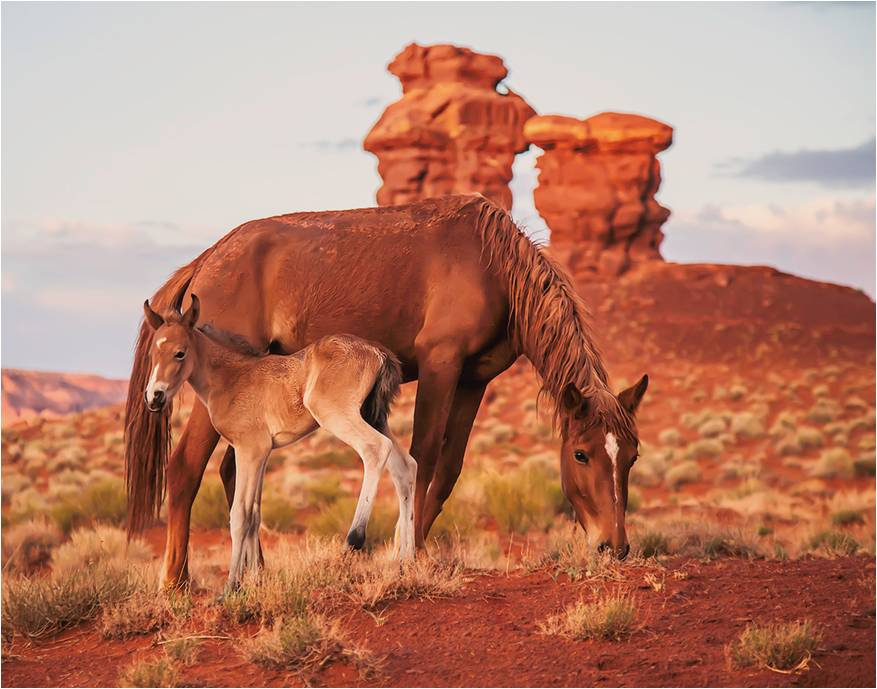 Fish and Wildlife Are Considering A Horse Hunt On The Navajo